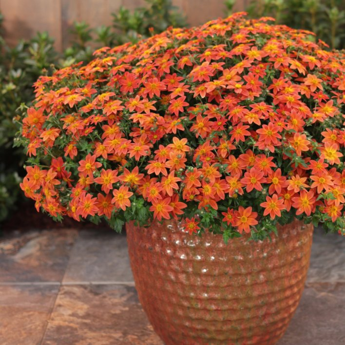 anniversary flowers - Flower Bouquets