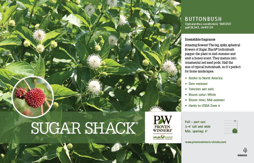 Cephalanthus Sugar Shack 174 Buttonbush 11x7 Quot Variety