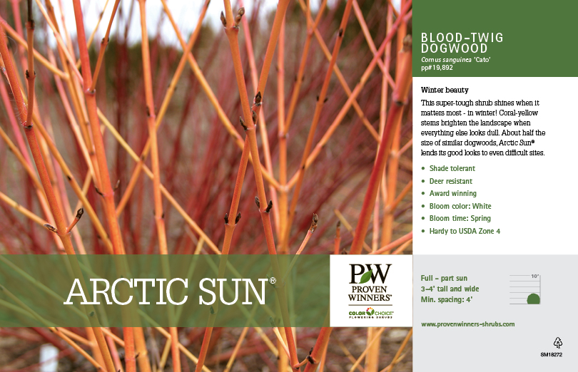 Cornus Arctic Sun 174 Red Twig Dogwood 11x7 Quot Variety