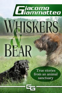 Whiskers and Bear by Giacomo Giammatteo