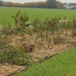 Tilbud på plantning af læhegn