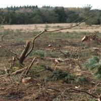 Jordbearbejdning i skov
