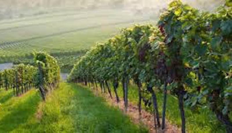 Attend the Filmmaker Celebration at Truro Vineyards