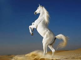 white-stallion