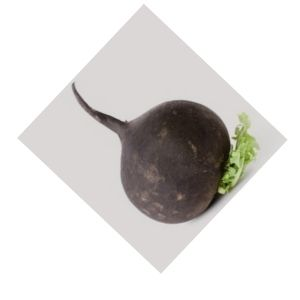 Radis noir Bio d'Alsace