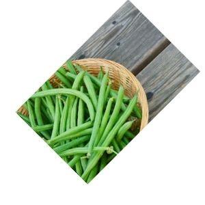 Haricot vert bio d'Alsace