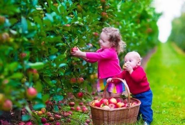 consejos saludables para nuestros hijos