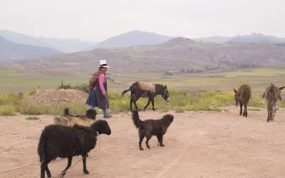 La sal del quechua que vive en las montañas