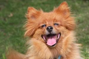 Gos sa i feliç