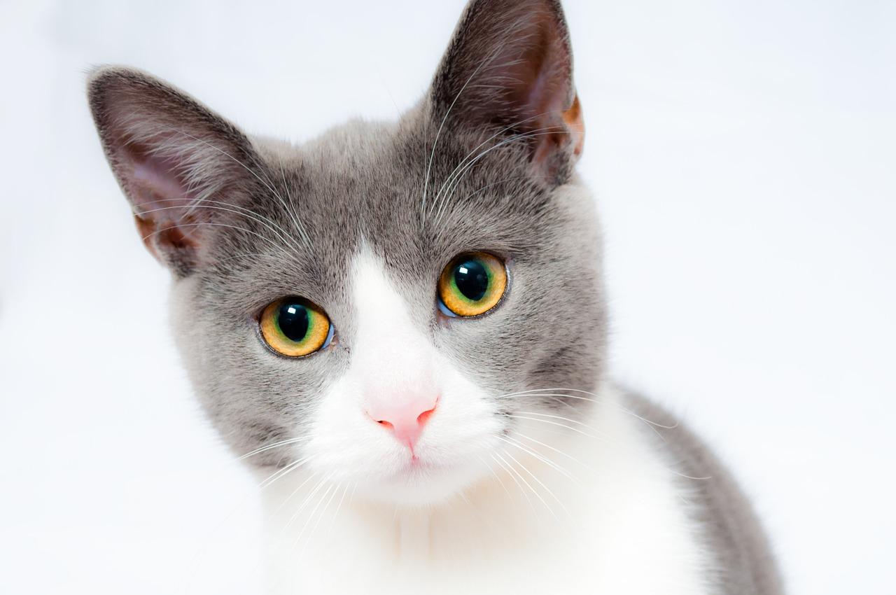 Pinso Gosbi per Gats