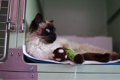 Sala de Recuperació per Gats