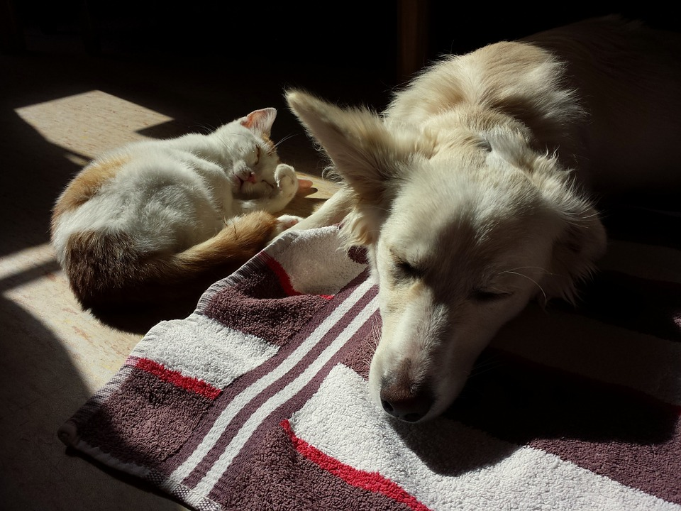 Gat i Gos Descansant o Dormint