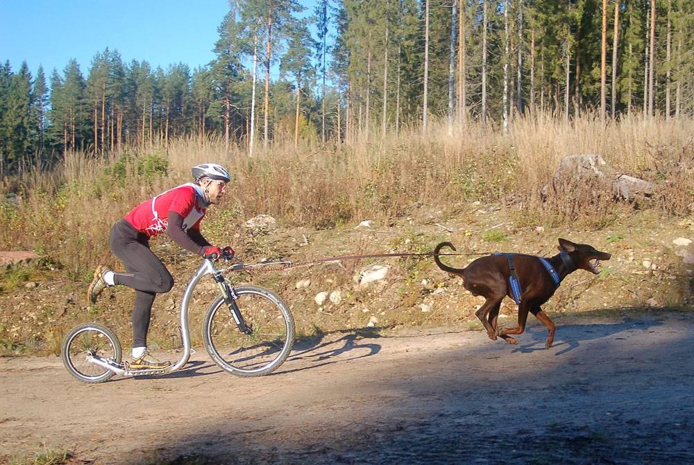 Scooter amb Gossos