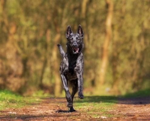 Dieta Mediterrània Adaptada a cada etapa de la vida del teu gos