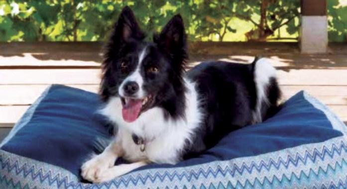 llits per gossos i gats