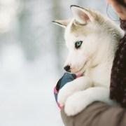 massa fred per al meu gos