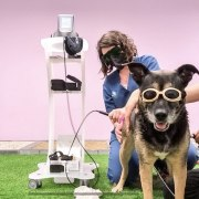 gos en tractament amb làser terapèutic