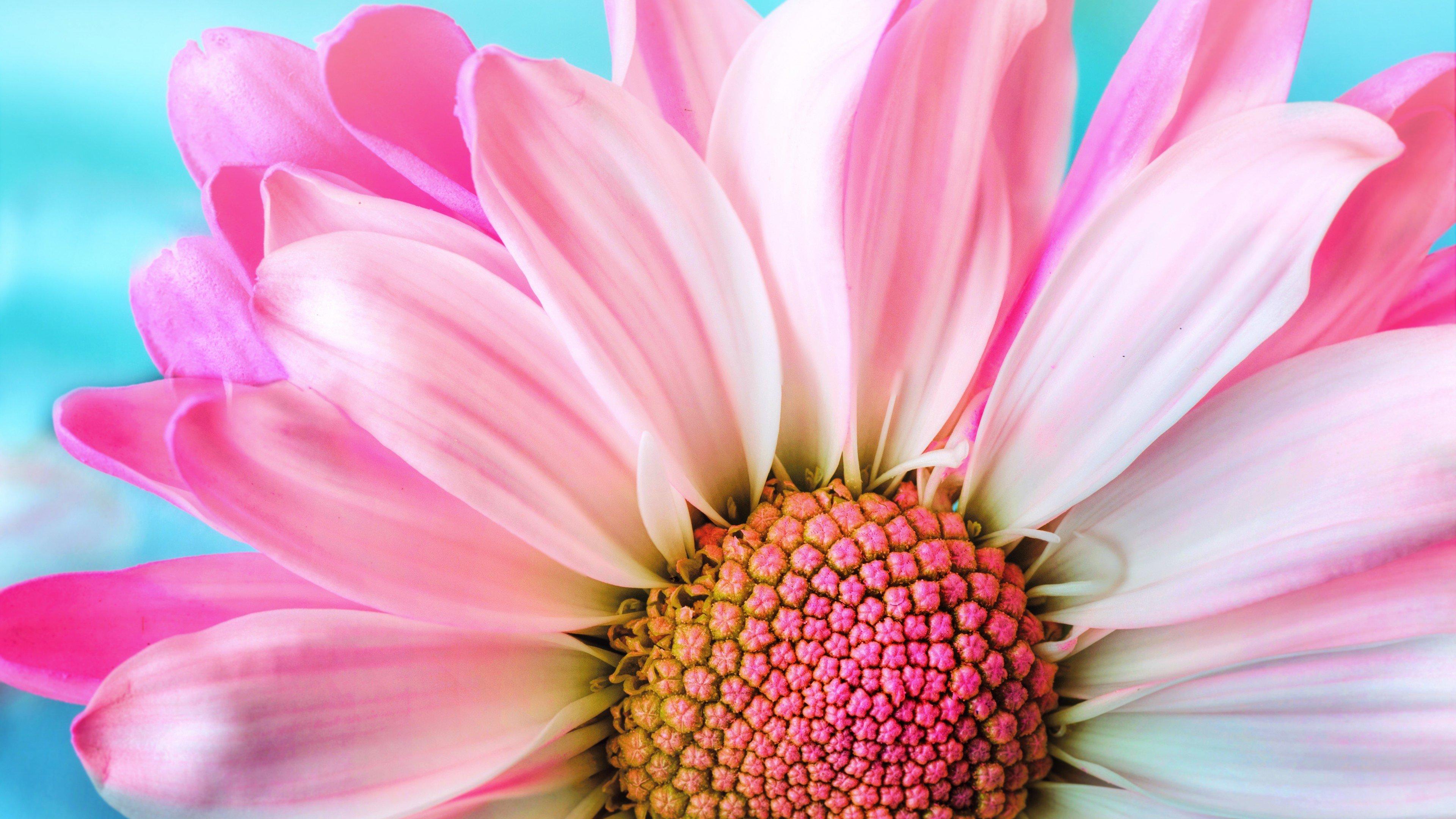 Çiçek Test Örneği