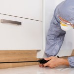 Reasons to Hire a Pest Exterminator