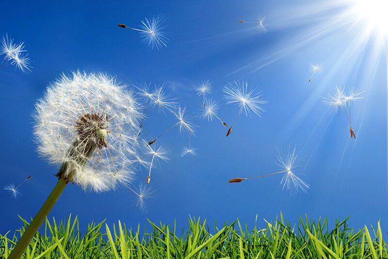 Keep Allergies in Check with These Tips from Pediatric Surgeons in Orange County, CA