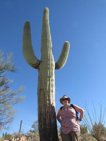 saguaro profession blogueuse licorne