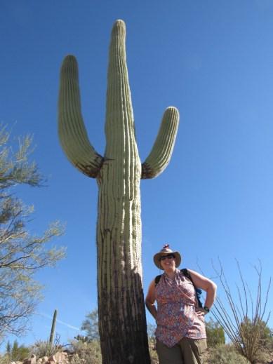 saguaro Profession Unicorn Blogger