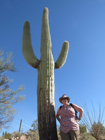saguaro profession blogueuse licorne