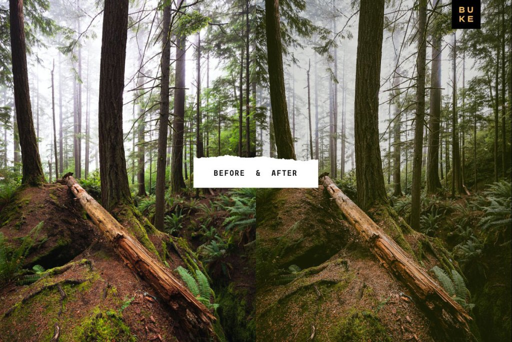 4 Forest Tales Lightroom Presets 5003403.