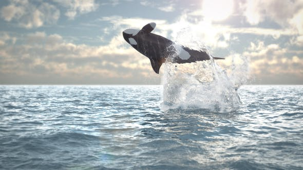 Videohive Jumping Whale Logo Reveal 21565667