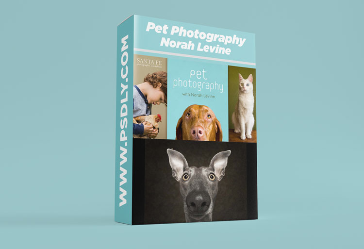 Pet Photography With Norah Levine