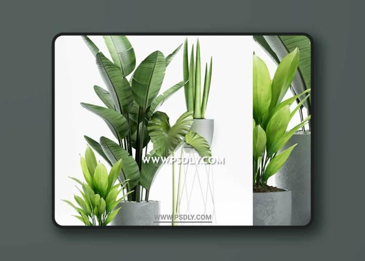 PLANTS 155 3D Model