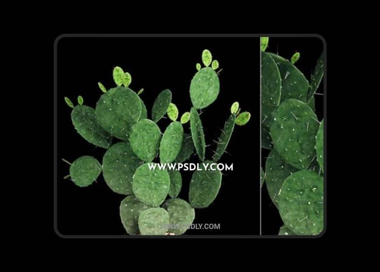 Plant 9 3D Model
