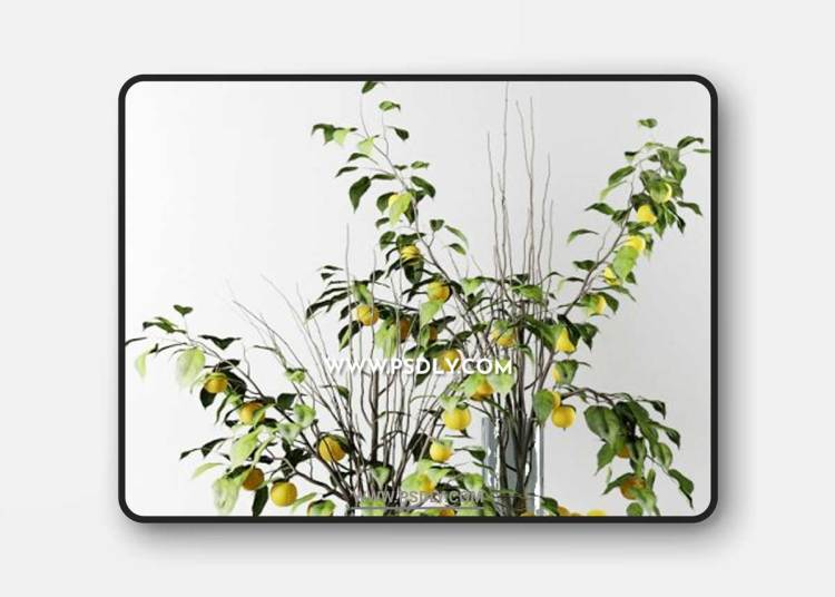 Bouquet of Chinese apple tree branches with yellow apples