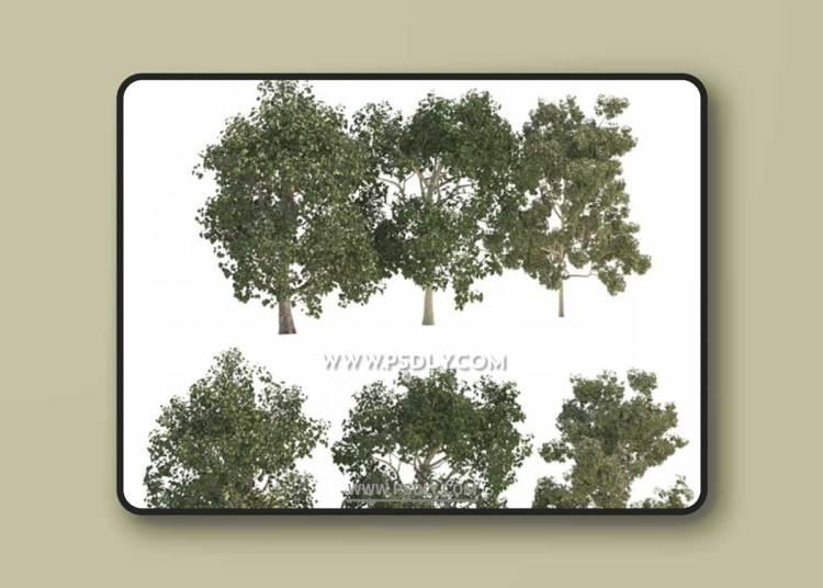 Three trees 3D Models