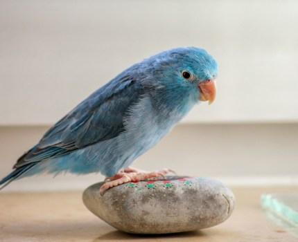 Tropezando en la misma piedra