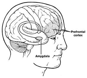 Amigdala, cervello e paura