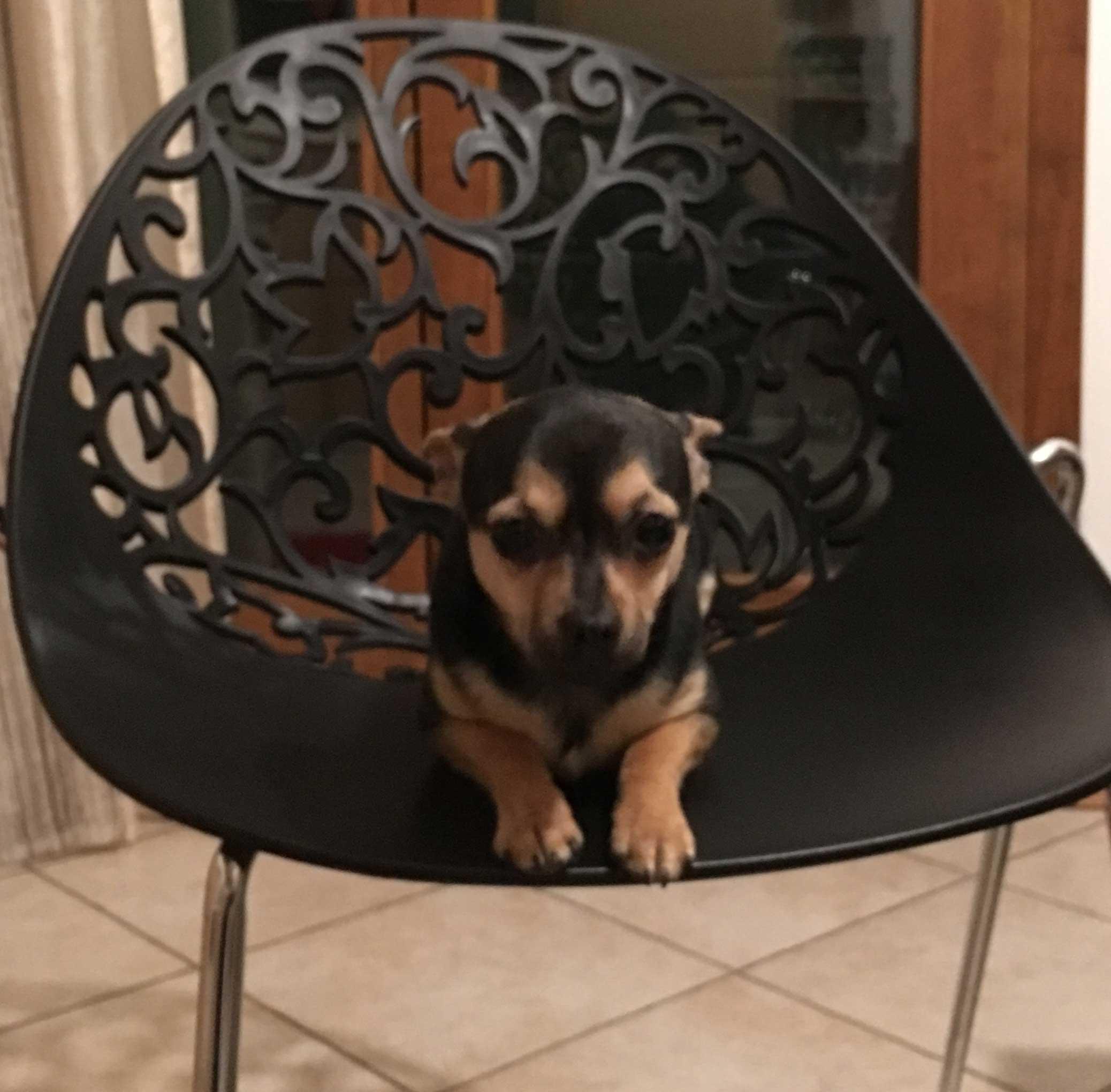 Pet therapy padova psicologa padova arianna bertazzolo for Pedro padova