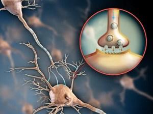 Estimulación Neuronal