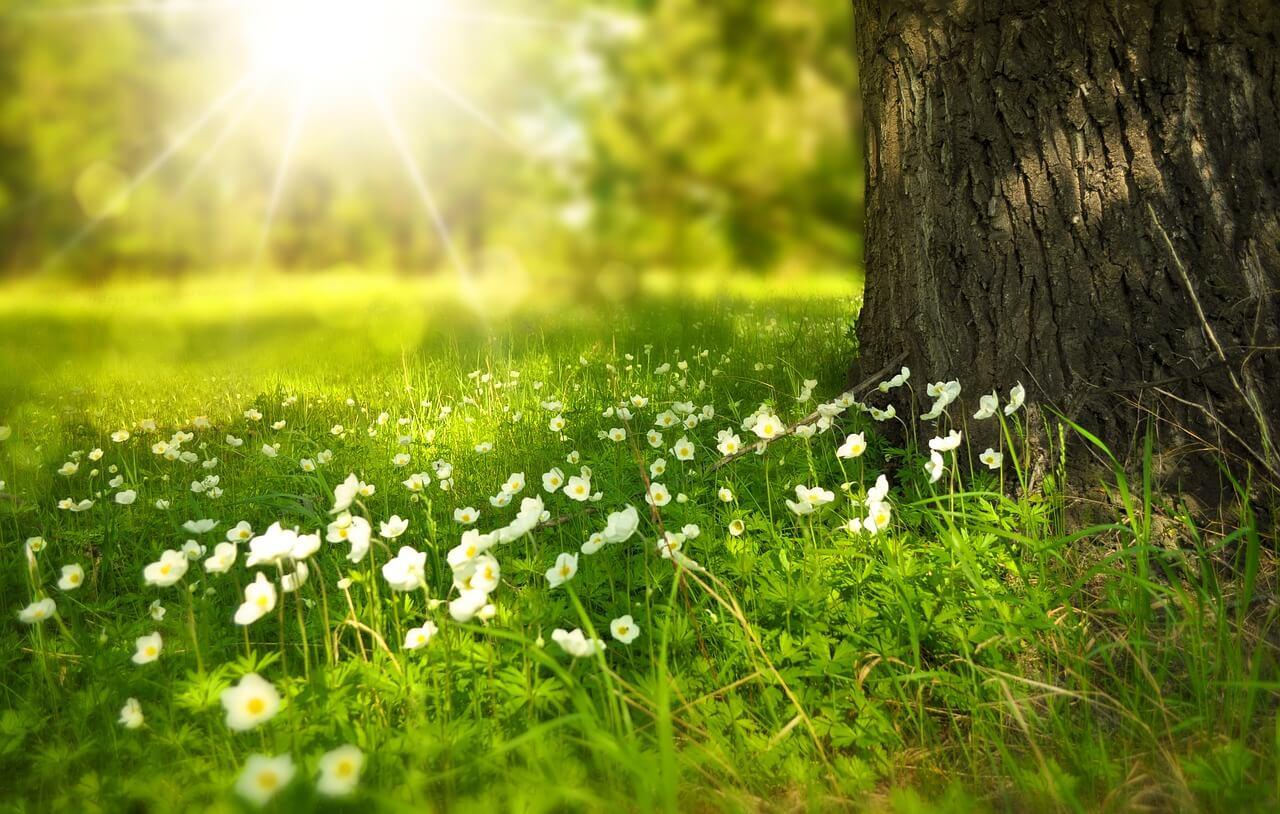 Read more about the article Vuoi migliorare la tua vita? Impara a vivere il presente