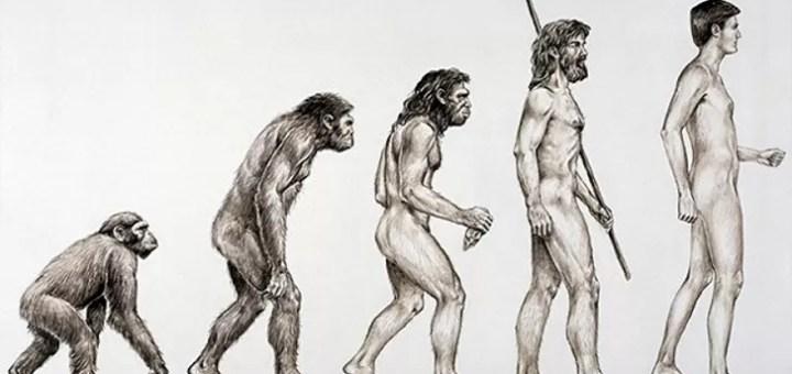 Darwin'in Evrim Teorisi Nedir?