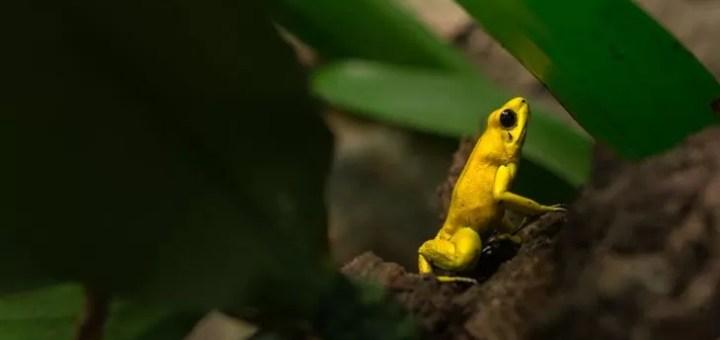 Amazon Yağmur Ormanlarının En Tehlikeli Hayvanları