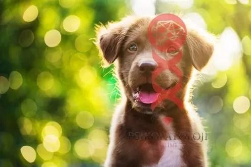 Köpeklerde Zeka ve Duygusallık