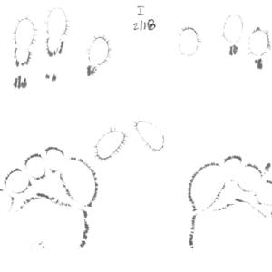 EEA-20100218-set_Page_1-small