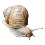 Is your computer going as slow as a snail?