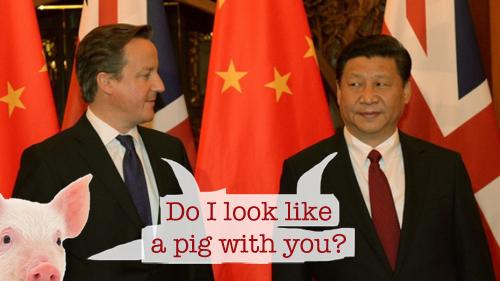 Cameron Xi pig Psipook
