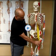 Quick Tip: Do you know how to find your psoas?