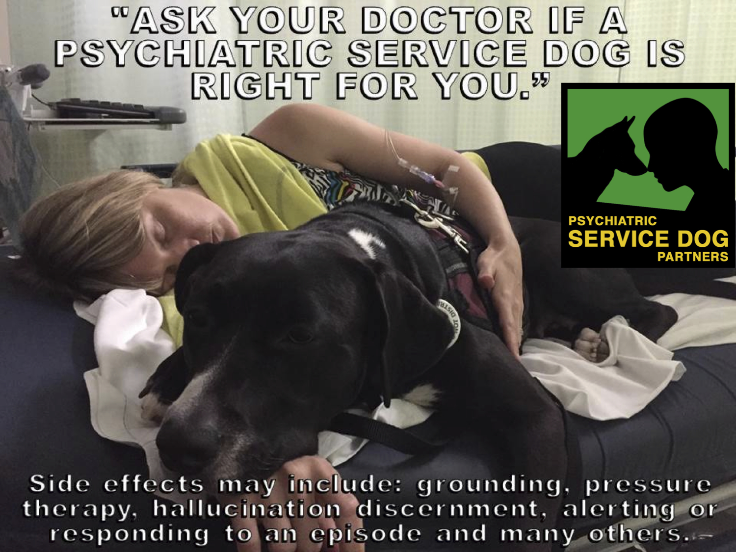 Legal Questions Businesses Can Ask About Service Dogs