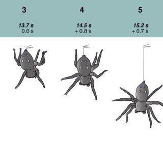Spánok skákajúceho pavúka