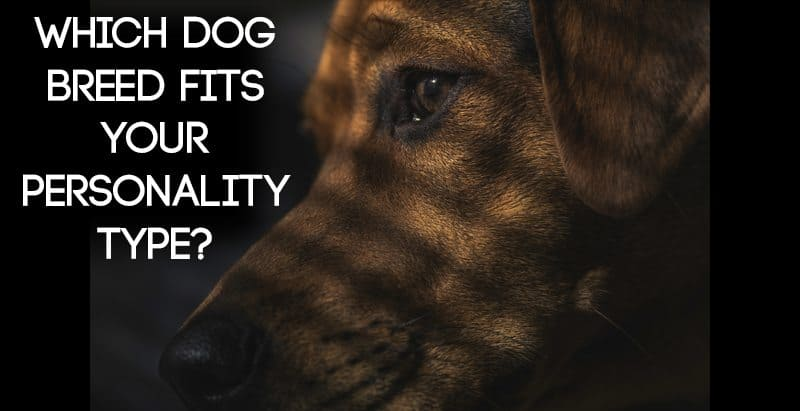 Which Dog Breed Fits Your Myers-Briggs® Type?