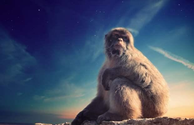 De flygende apene er psykopatens medløper